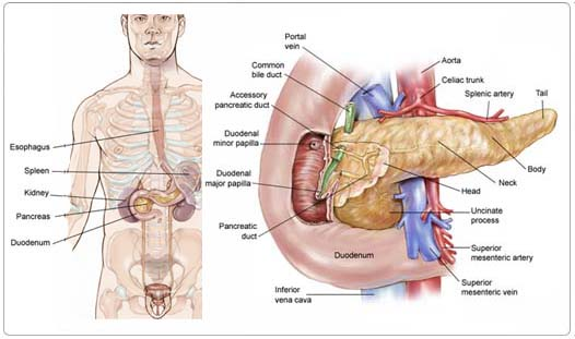 Other areas of the body such as the liver lungs or the peritoneum the